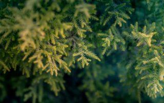 Perfect Tree Blog Image